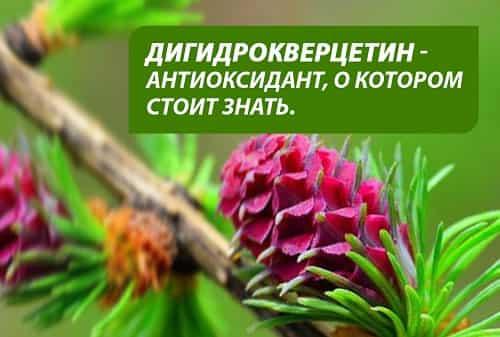Digidrokvercetin-antioksidant
